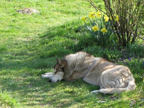 wolfsky3
