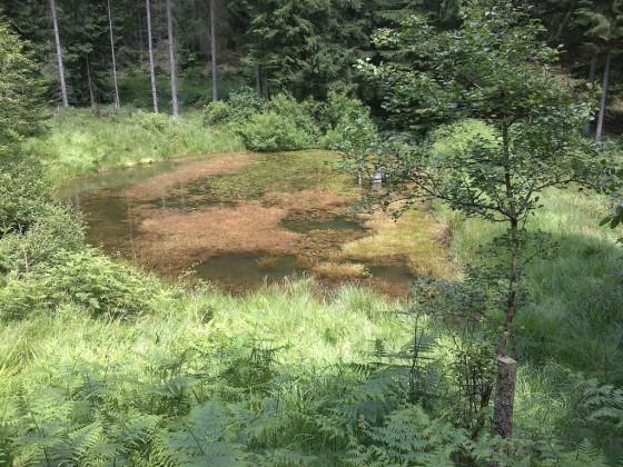 Odenwald - Rößteich