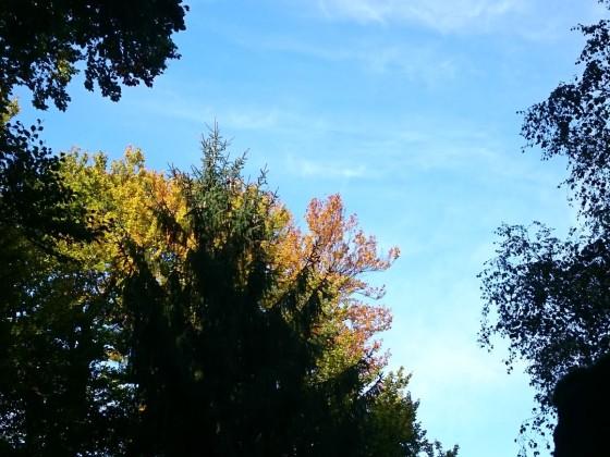 Soonwald_Oktober_16