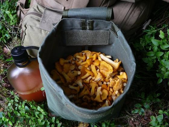 Pilzsuche - Pfifferlinge (Eierschwammerl)