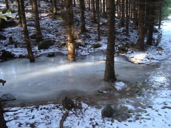 kleine Überraschungen in Schwedenswäldern auf die man Vorbereitet sein sollte