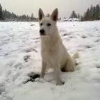 erster Schnee dieser Saison ...und Hummeln im A....