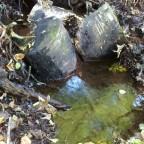 Naturquelle-Soonwald-1