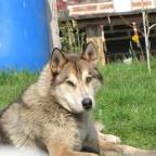 wolfsky1