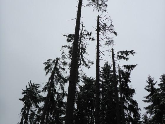 Gefahr von Oben: Raureifschäden im Wald