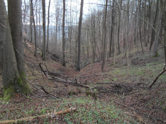 16_Wald
