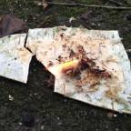 4 alte Birke brennt